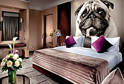 Фотопанно с собаками, мопс в спальне